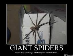23 Funny Spider Memes Weneedfun - giant scary spiders memes