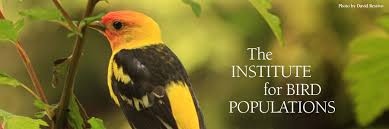 the institute for bird populations u2013 home page