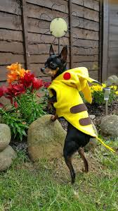 Yorkie Costumes Halloween 59 Dog Costumes Images Dog Costumes Pet