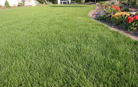 qa fall lawn care yard and garden news university of idolza