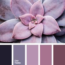 Pink Color Scheme Violet Pink Color Color Palette Ideas