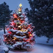 long branch tree lighting long branch tree lighting best of nj nj lifestyle guides