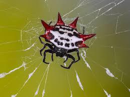 spider wallpaper 2048x1536 46678
