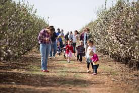top things to do with your family in lubbock visit lubbock