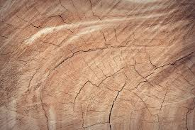 free images tree nature sand abstract board wood antique texture leaf floor interior building trunk old home dark decoration color macro natural brown soil grunge dried closeup lumber decor