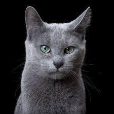 animal soul u201d beautiful portraits of the bad cats by robert
