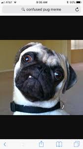Confused Dog Meme - dog memes album on imgur