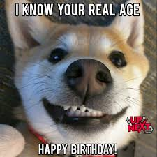 Birthday Dog Meme - happy birthday meme funny 30 naughty birthday memes cake meme