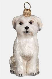 144 best maltese puppies images on maltese puppies