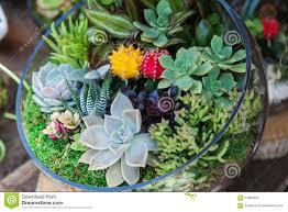 terrarium with cactus succulent plant stock image image 57800047