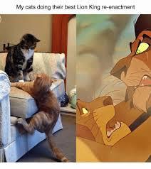 Lion King Meme Maker - my cats doing their best lion king re enactment meme on me me