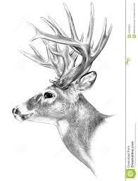 deer pencil drawing google search draww pinterest google