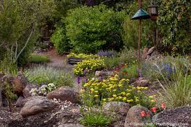mn native plants water saving yard photo challenge