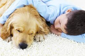 get pet protect floors home select