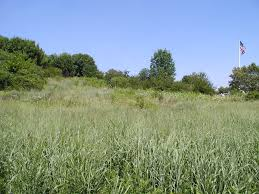 planting native grasses don torino u0027s life in the meadowlands native grasses for the