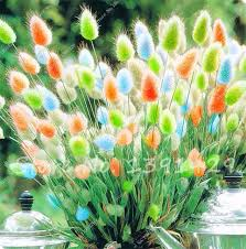 shop 100pcs tropical ornamental plants grass seeds bunny