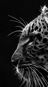 wallpaper black tiger hd iphone hd black white hd wallpapers