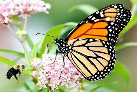 tacoma entrepreneur jump starts 50k prize to track monarch