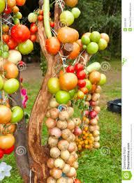 vegetable tree stock image image of plum food grass 26391487
