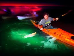 Kayak Night Lights Leave The Camera Behind On Bioluminescent Kayak Trips By Night