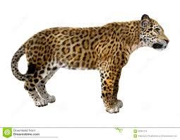 jaguar clipart jaguar hunt stock illustrations u2013 178 jaguar hunt stock