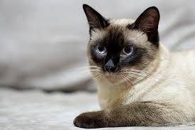 alimentazione casalinga gatto alimentazione casalinga gatto adulto dogalize