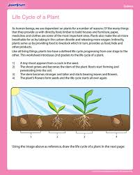 life cycle of a plant free science worksheet for 2nd grade