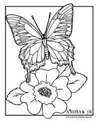butterfly coloring pages hard butterfly coloring pages coloring pages pinterest