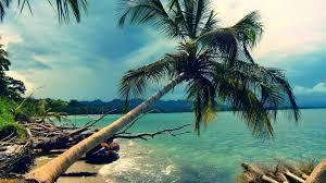 Palm Tree Wallpaper 7023471 Beach Coconut Tree Jpg 1920 1080 Dreamland Beach