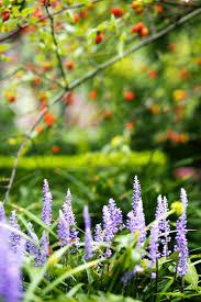 Easy Herbs To Grow Inside Growing Thyme Indoors Conditions Varieties U0026 More