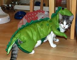 Cat Halloween Costumes Cats 8 Cat Halloween Costumes Images Animals Cats