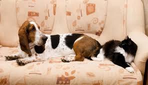 se débarrasser d un canapé comment se débarrasser de l odeur d urine sur le canapé pour toujours