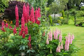 Hummingbird Plant Top 10 Flowers To Attract Hummingbirds