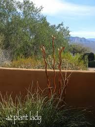 visit to a client u0027s desert garden ramblings from a desert garden