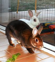 Burglars by Bunny Burglars Quietly Creep Into The Kitchen For A Vegetable