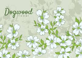 dogwood flowers free dogwood flowers free vector stock