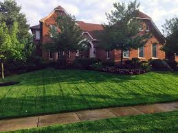 how to get a lush green lawn neighbors will envy angie s list