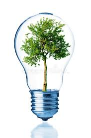 tree inside of the light bulb stock photo image 50483275