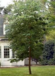83 best our trees and plants images on fast growing