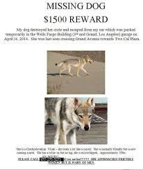 Lost Dog Meme - 1500 reward lost vclak dog in la not a coyote joke as seen on