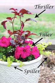 color filled flower pots gardening u0026 outdoor ideas pinterest