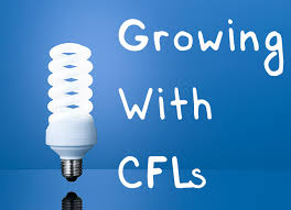 6400k cfl grow light cfl grow lights a beginner s guide to growing with cfls