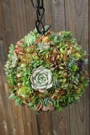 best 25 small succulent plants ideas on pinterest plants small