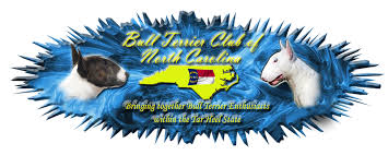 america pit bull terrier club bull terrier club of north carolina