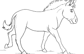 zebra without stripes coloring page eson me