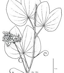 free coloring page of the rainforest free coloring pages of plant tropical printable plants jungle leaf