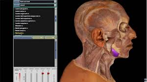 mcgraw hill education connect for anatomy and physiology youtube