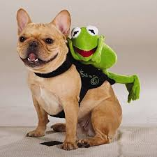 top paw disney pet dog l xl kermit the frog ride along halloween