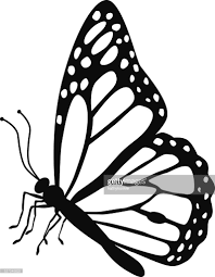 monarch butterfly side view in black and white vector getty