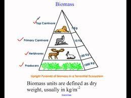 ecological pyramids youtube